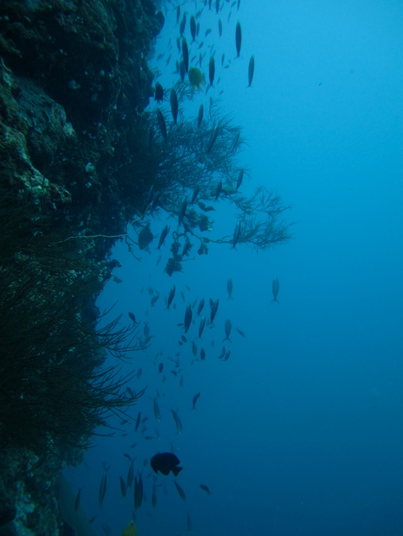 View from 12 metres depth, Fiji.